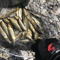 Masashi Yokoiさんの東京都あきる野市での釣果写真