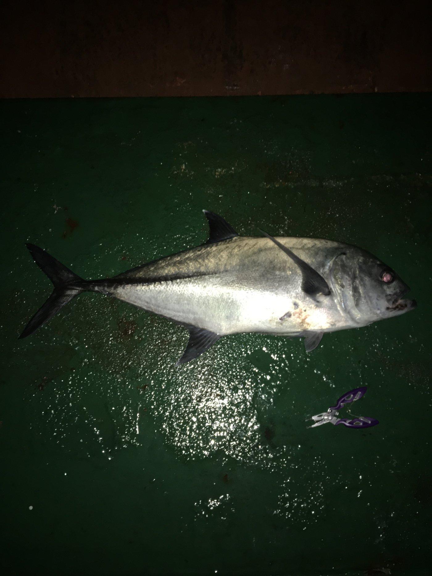 Kennyさんの投稿画像,写っている魚はギンガメアジ