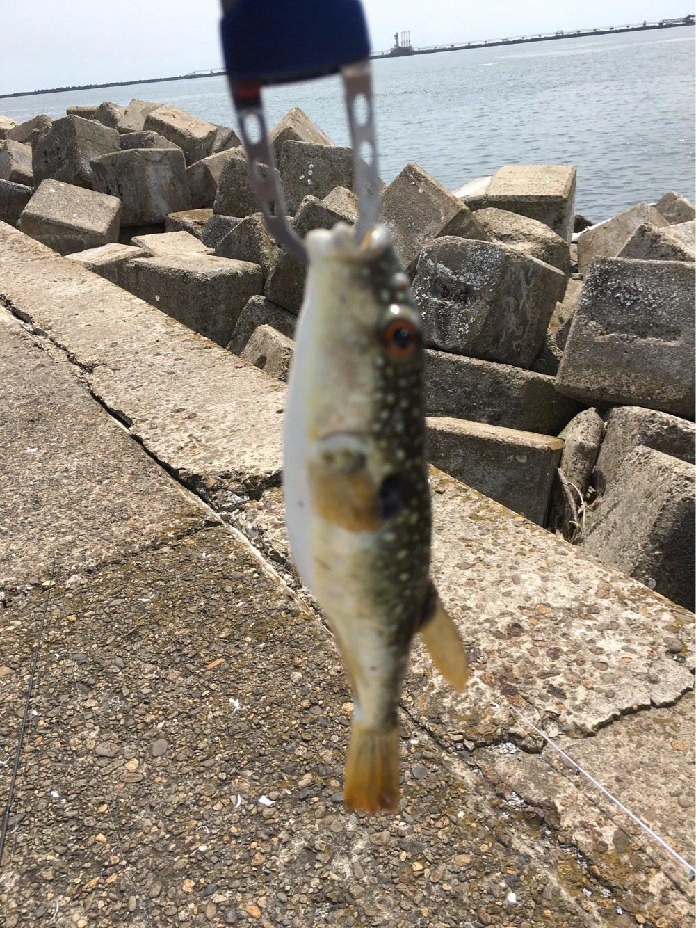やぎさんの投稿画像,写っている魚は