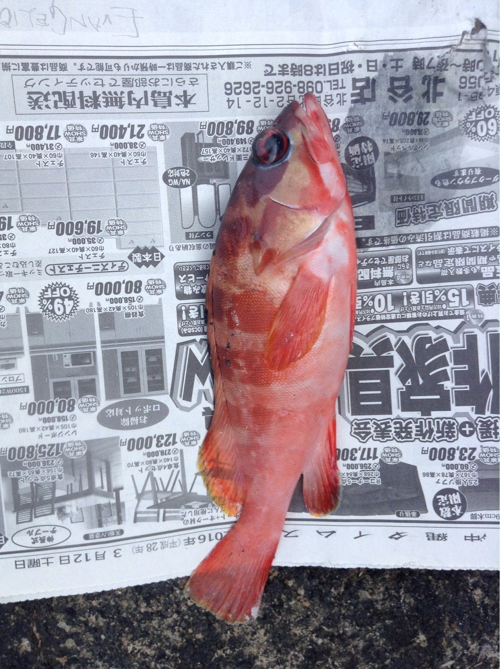 クマさんの投稿画像,写っている魚は