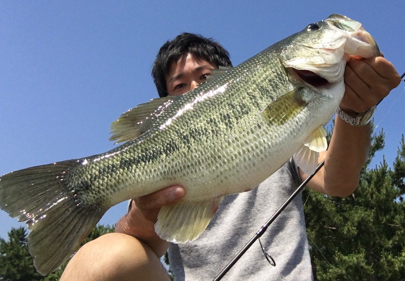K-ITOさんの投稿画像,写っている魚はブラックバス