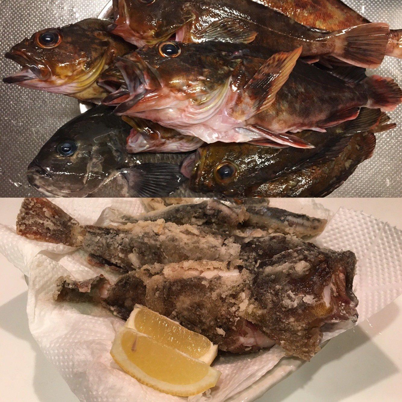 MASATOさんの投稿画像,写っている魚はカサゴ