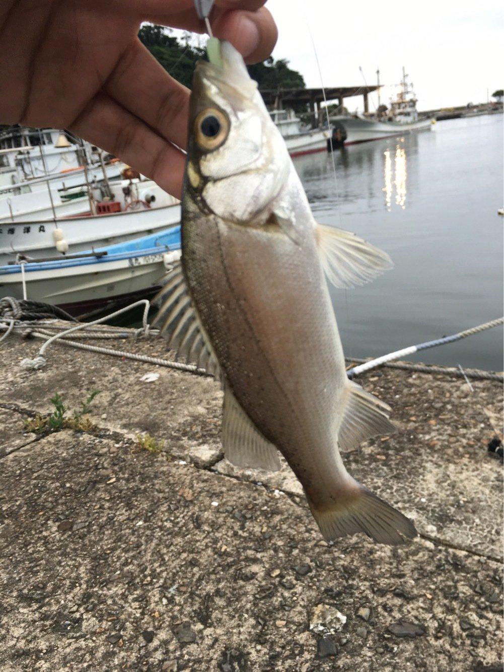 大五郎さんの投稿画像,写っている魚はスズキ