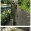 rin82さんの岡山県小田郡での釣果写真