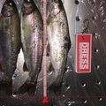 ビビさんの富山県中新川郡での釣果写真