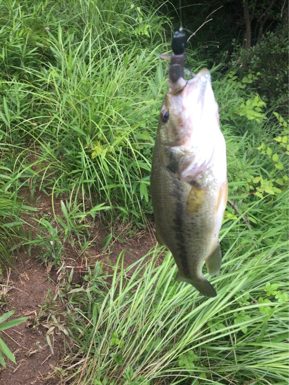 T@KEponさんの投稿画像,写っている魚はブラックバス