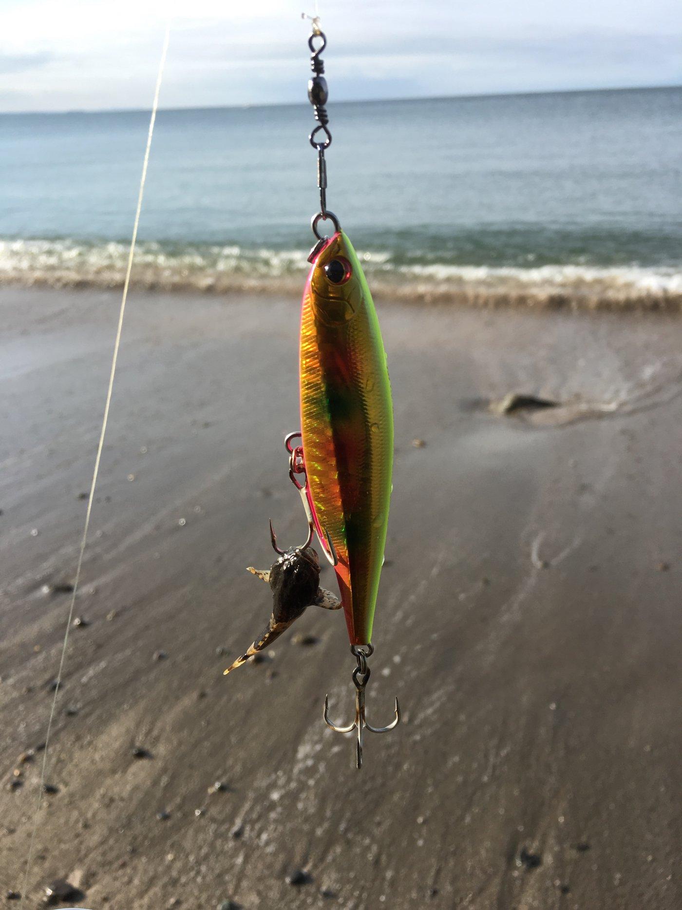 S.M.i.yさんの投稿画像,写っている魚はカジカ