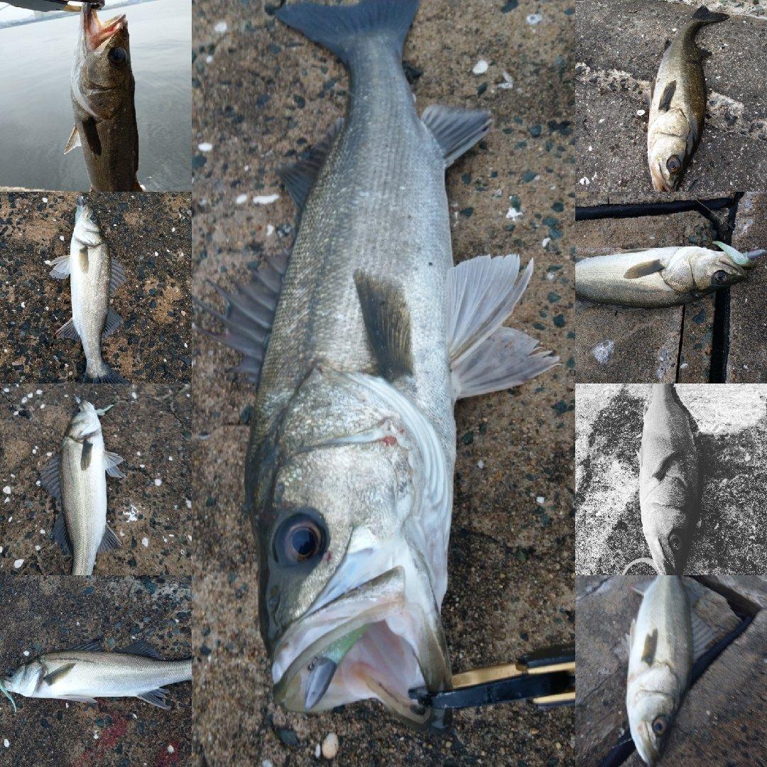 ナンチャンさんの投稿画像,写っている魚はカサゴ,スズキ,メバル