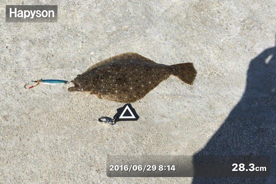 加藤  明さんの投稿画像,写っている魚はヒラメ