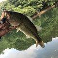 angler1341Rさんの福岡県嘉穂郡での釣果写真