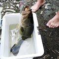 りょーくんさんの茨城県桜川市での釣果写真