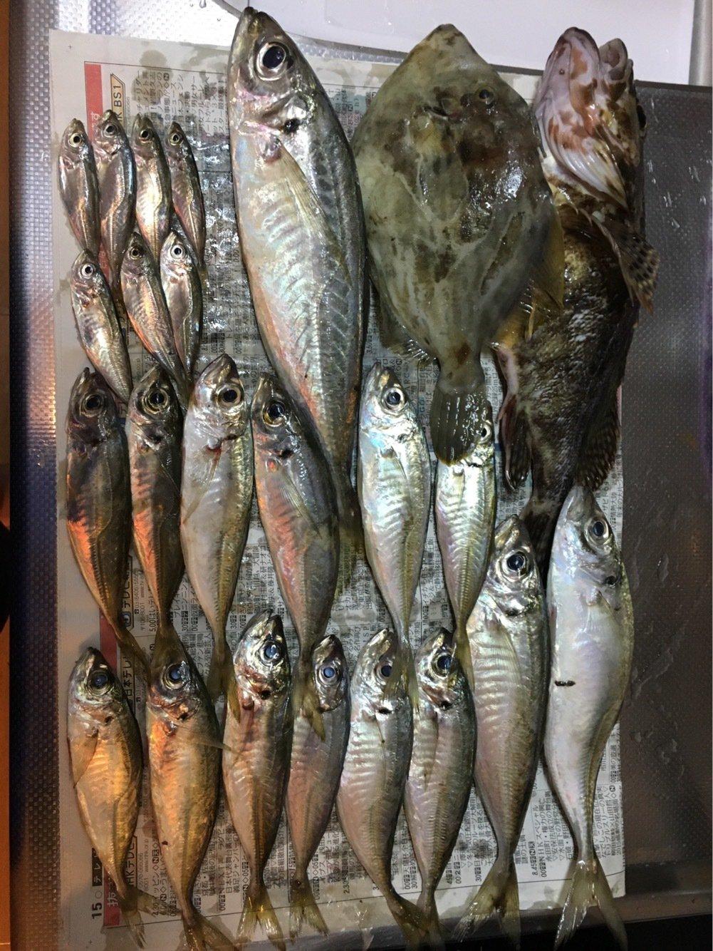 ひょーどるさんの投稿画像,写っている魚はアジ