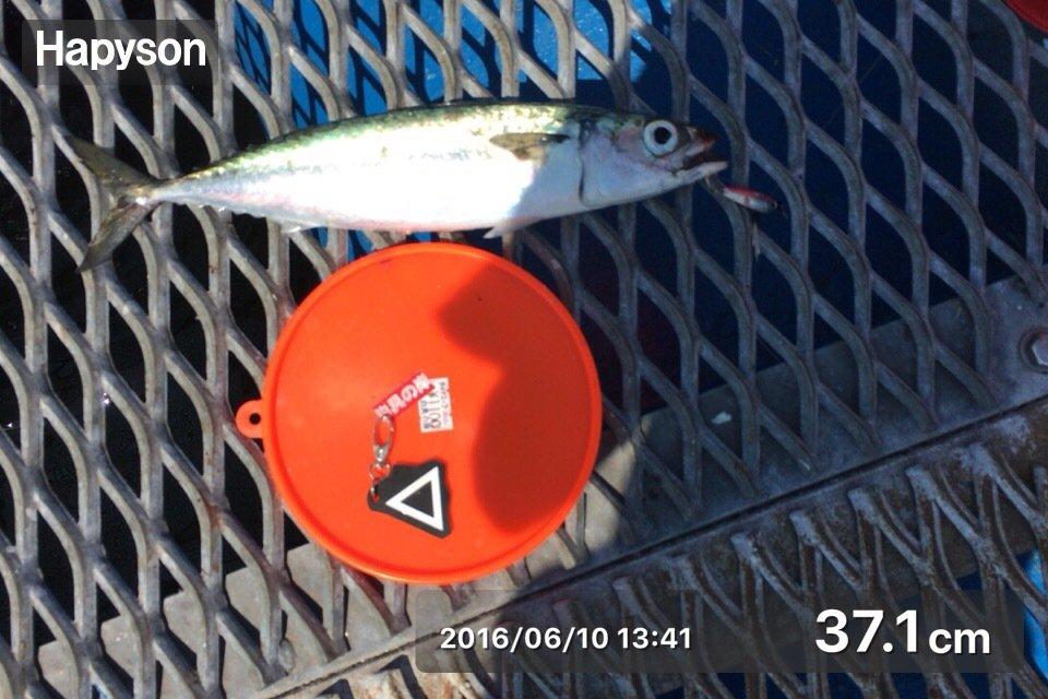 慧サマさんの投稿画像,写っている魚はマサバ