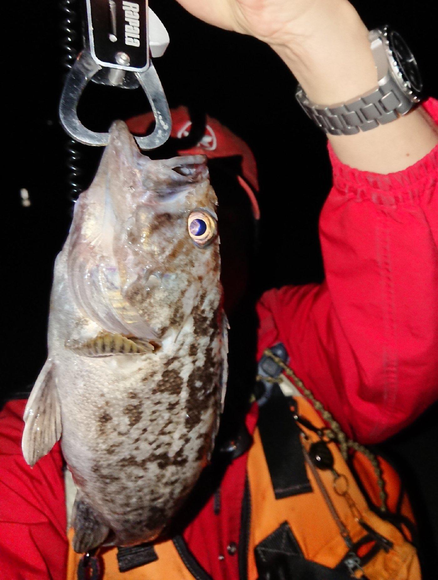 Takaさんの投稿画像,写っている魚はクロソイ,メバル
