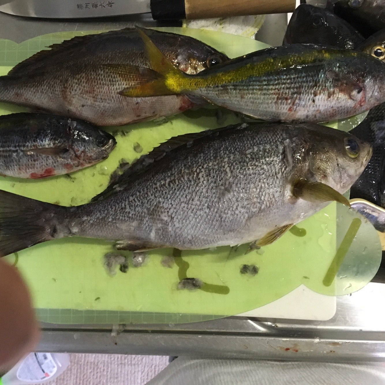 戸田和浩さんの投稿画像,写っている魚は