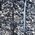 みつタロウさんの静岡県沼津市でのダツの釣果写真