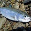 Kuniさんの北海道標津郡での釣果写真