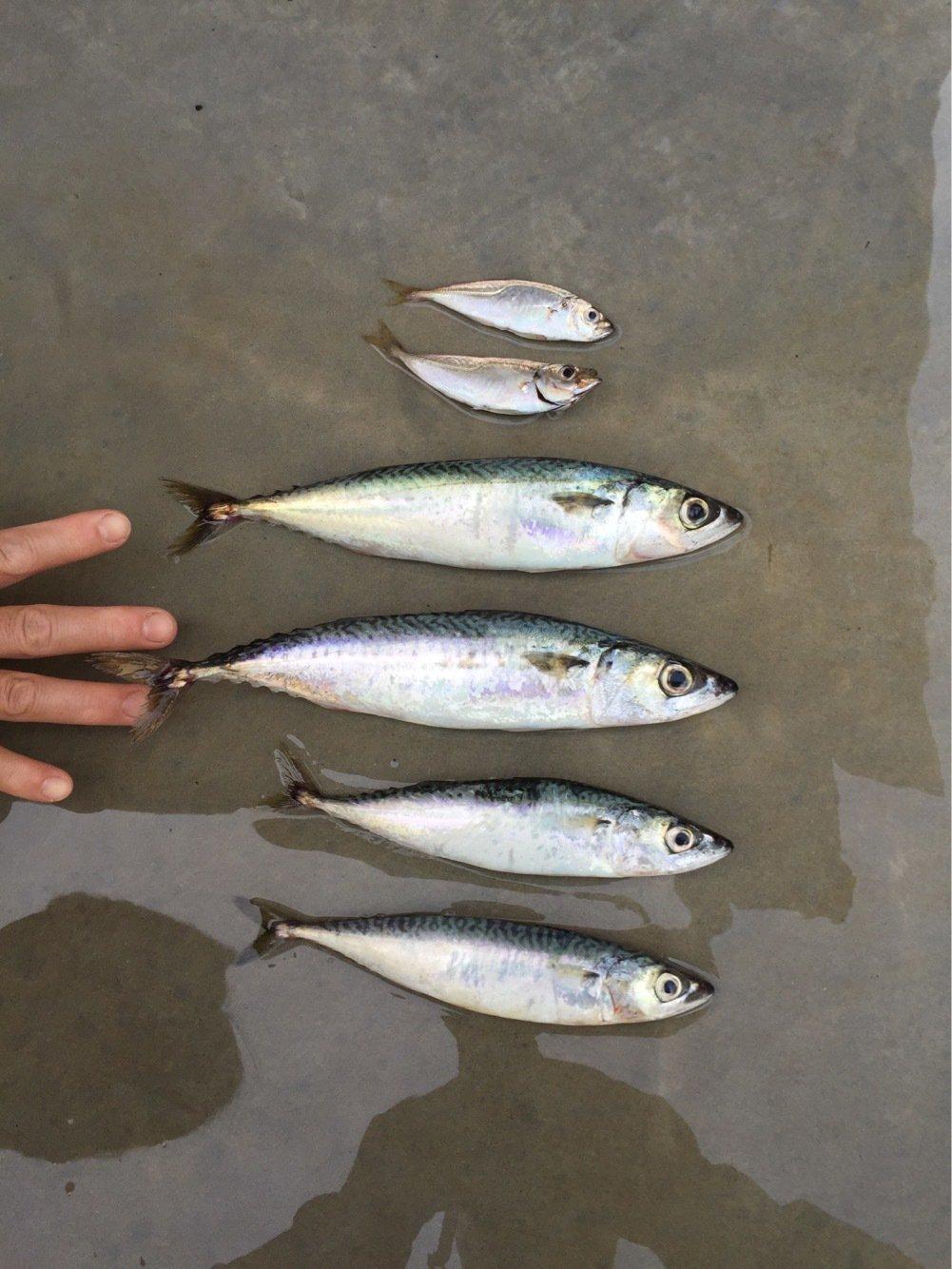 ウオタロウさんの投稿画像,写っている魚は
