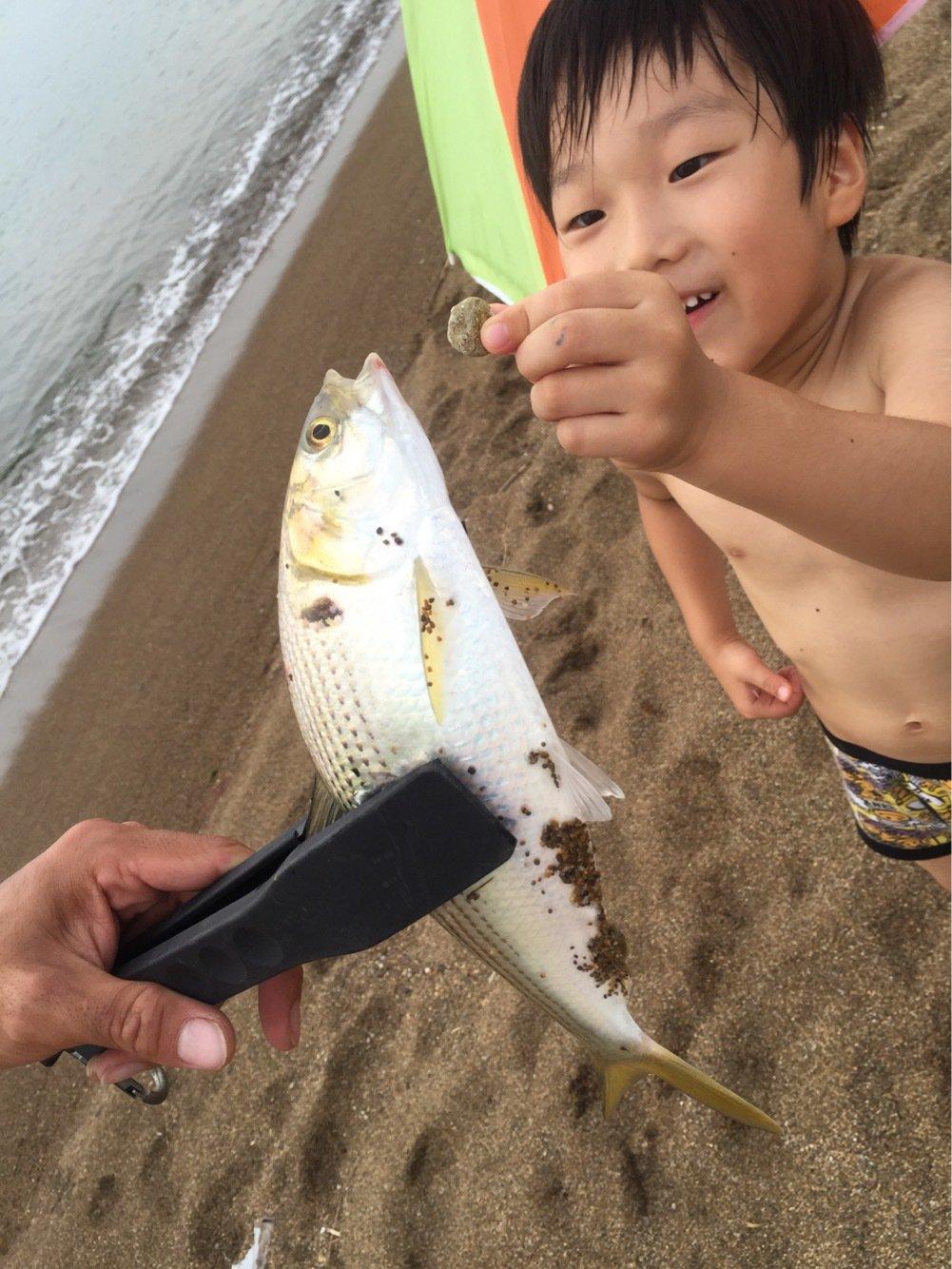たかさんの投稿画像,写っている魚はコノシロ