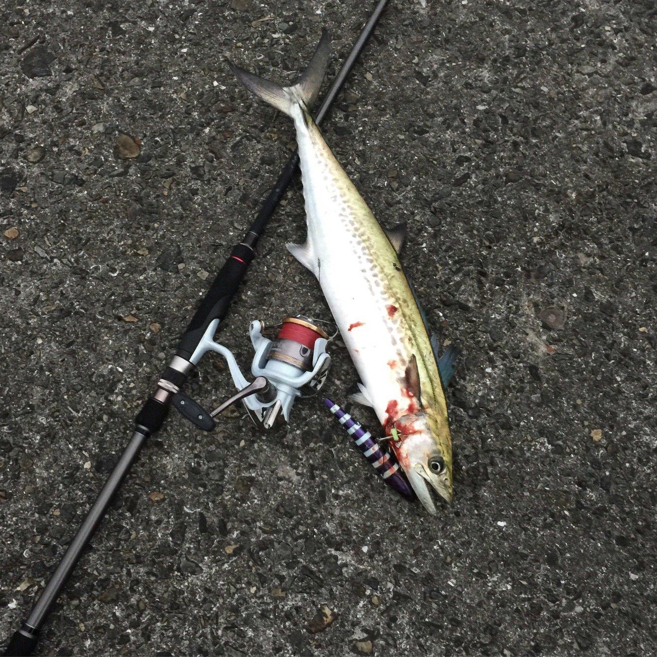 thegskさんの投稿画像,写っている魚はサワラ