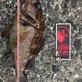 タネ子さんの北海道登別市での釣果写真