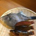 とも6193さんの愛媛県松山市でのカワハギの釣果写真