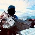 チョコさんの鹿児島県肝属郡での釣果写真