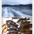 ビギにゃーさんの青森県でのキツネメバルの釣果写真