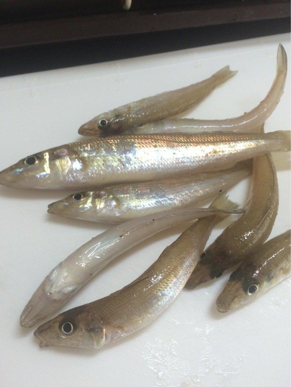 BeBeさんの投稿画像,写っている魚はシロギス