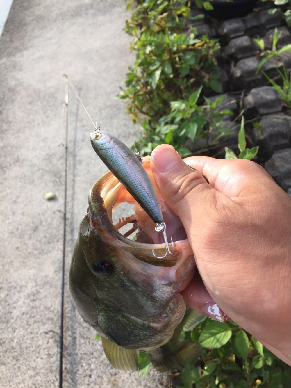 久保田さんの投稿画像,写っている魚はブラックバス