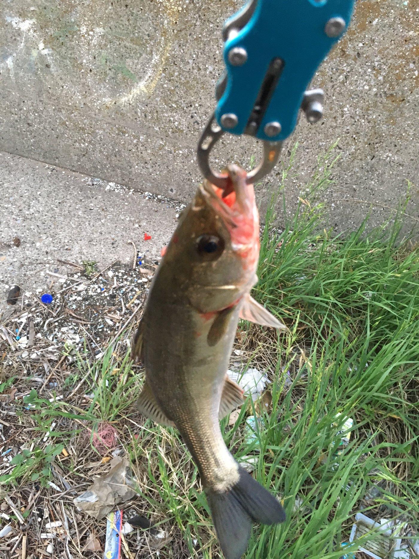 マサ1173さんの投稿画像,写っている魚は