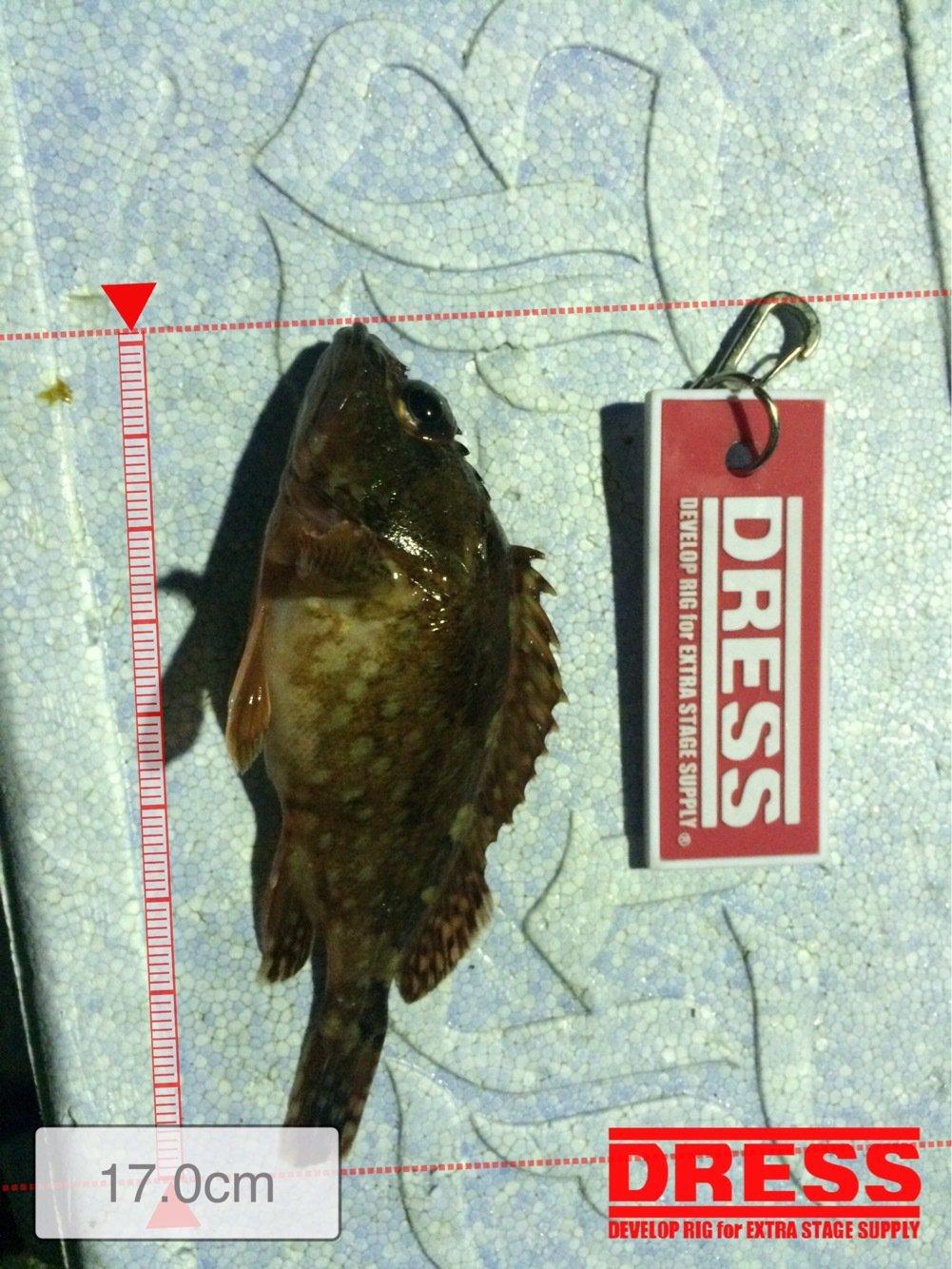 鱸建設さんの投稿画像,写っている魚は