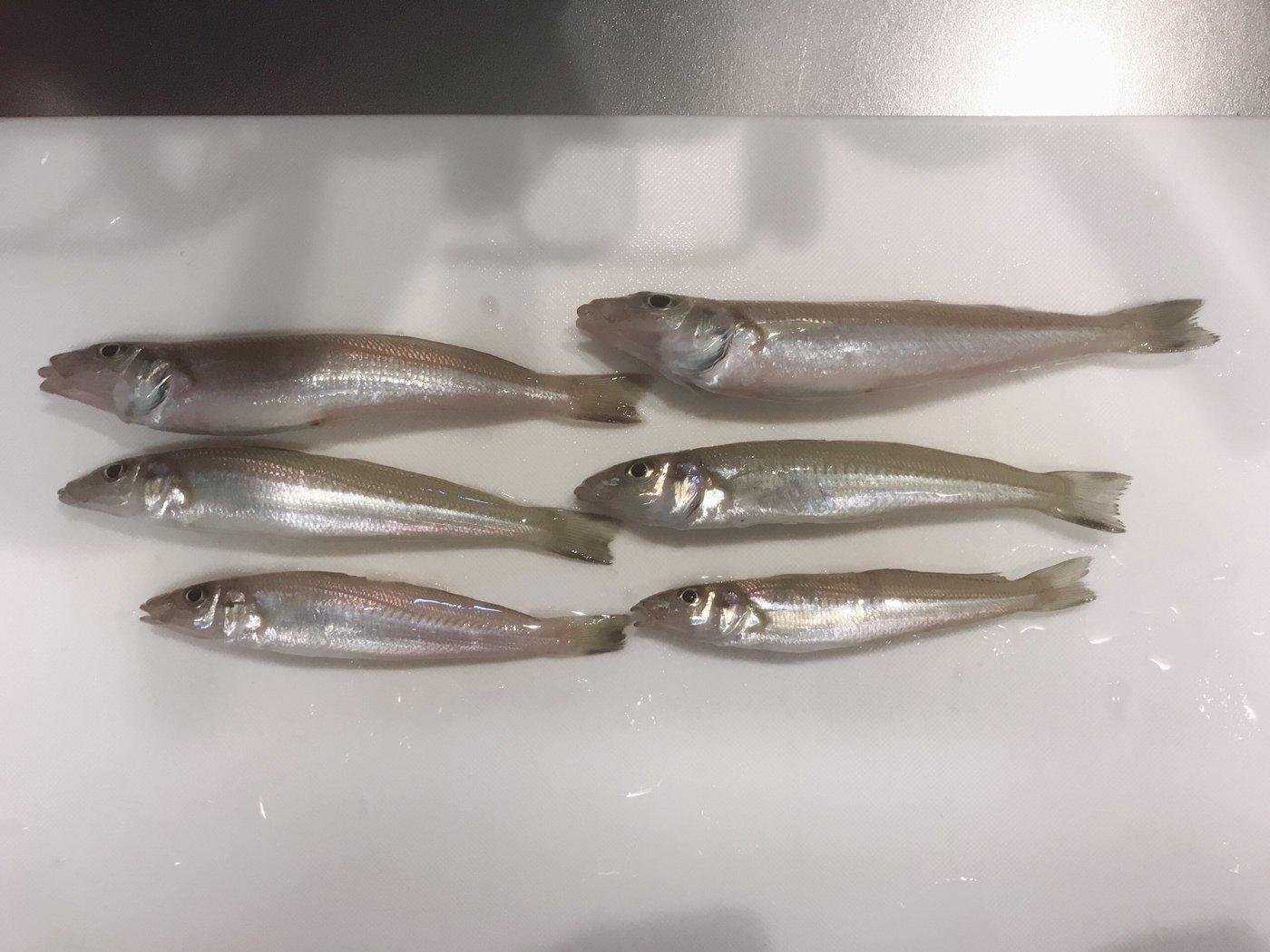 Akiraさんの投稿画像,写っている魚はシロギス