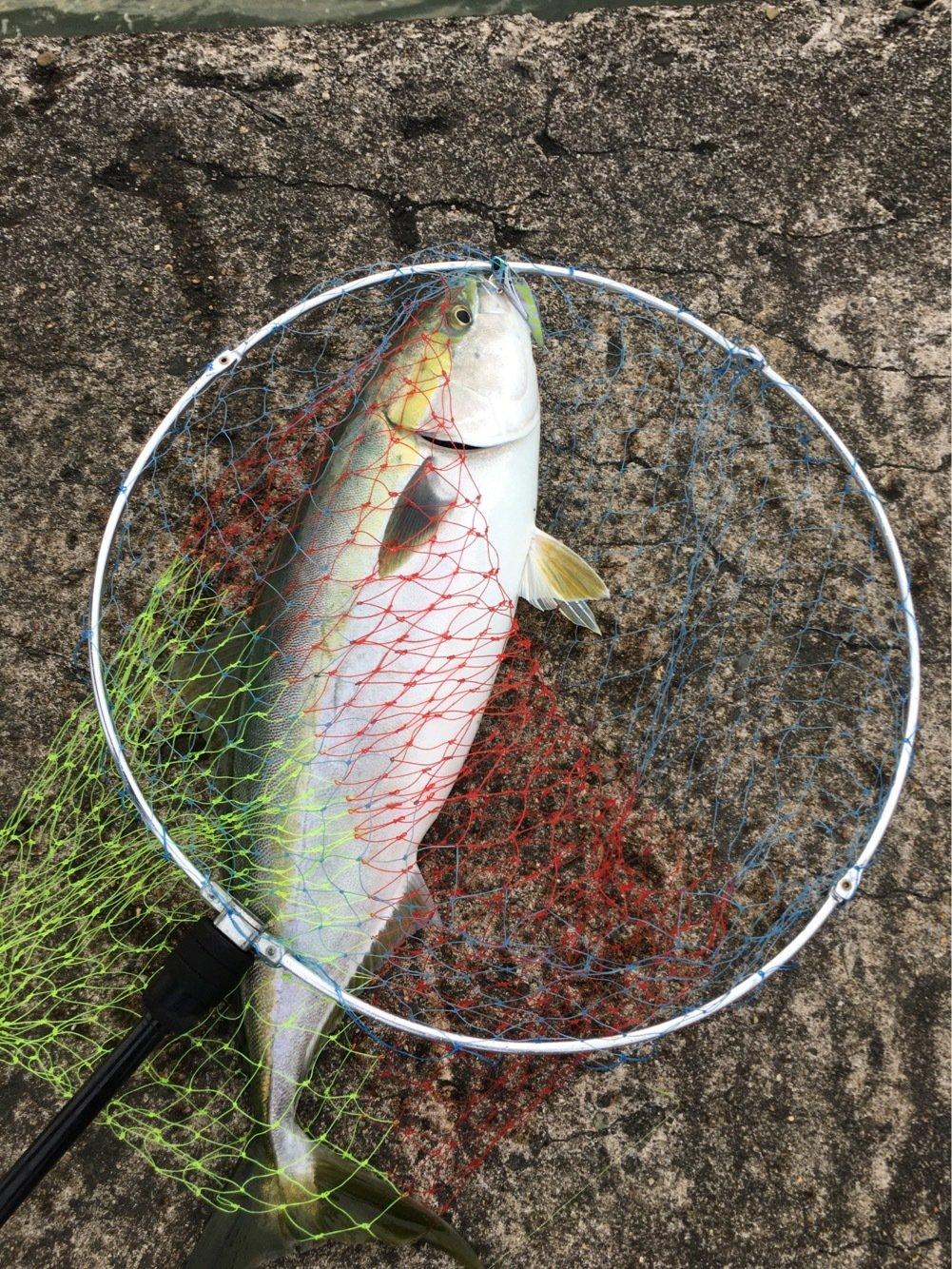 kさんの投稿画像,写っている魚はワラサ