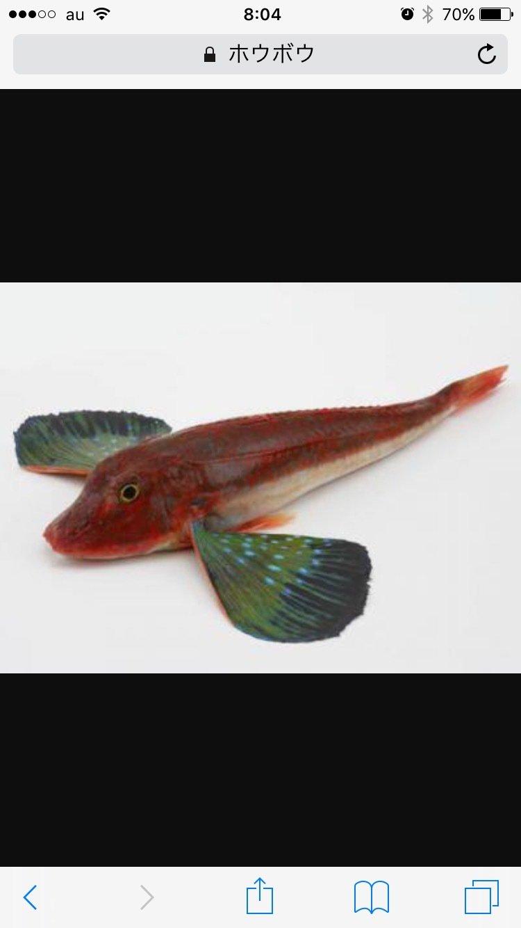 飛天御剣流さんの投稿画像,写っている魚は