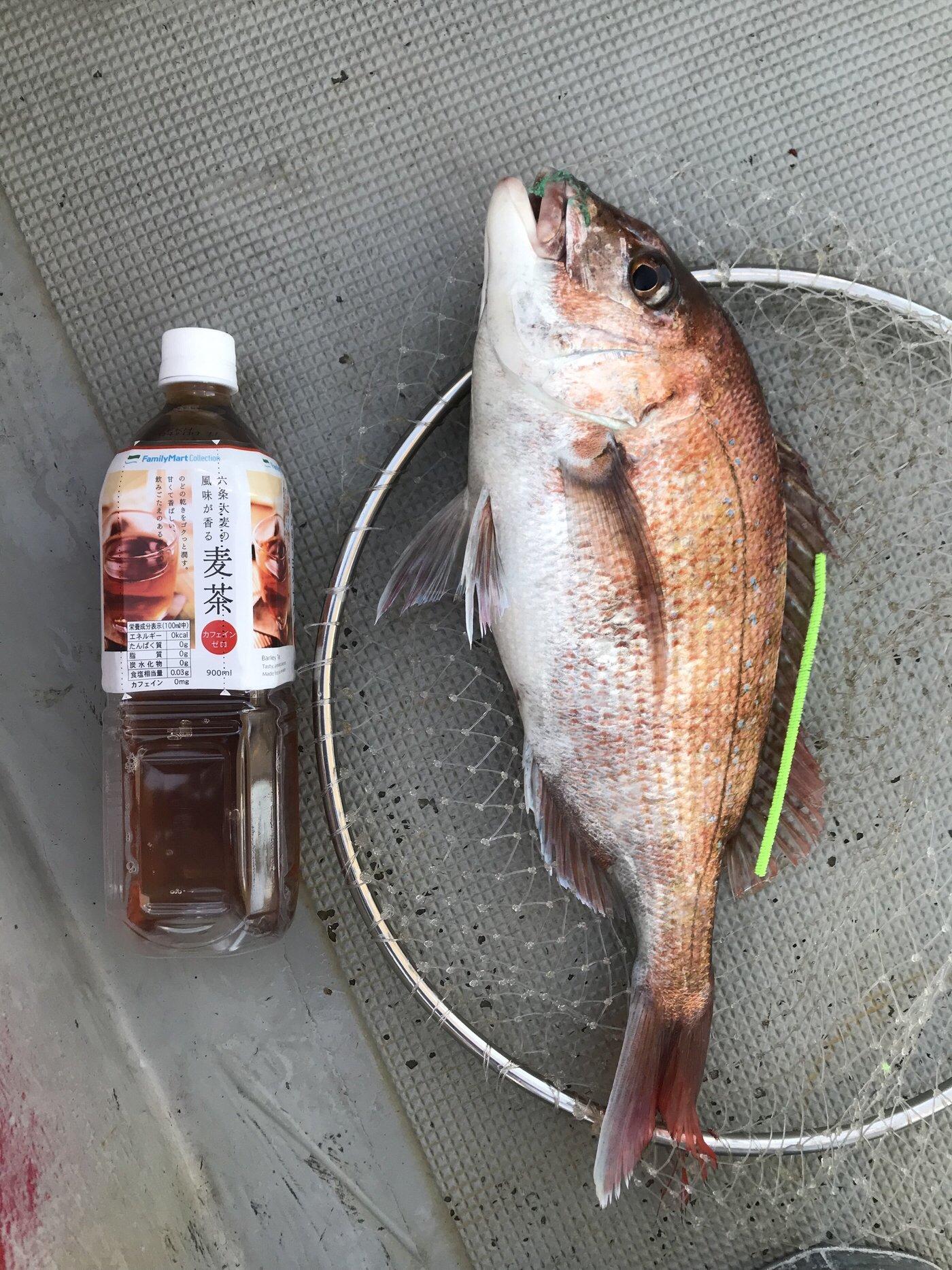 ricccccccckyさんの投稿画像,写っている魚はマダイ