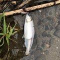 あぶっちさんの北海道登別市での釣果写真
