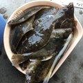 ワカマンさんの北海道常呂郡での釣果写真