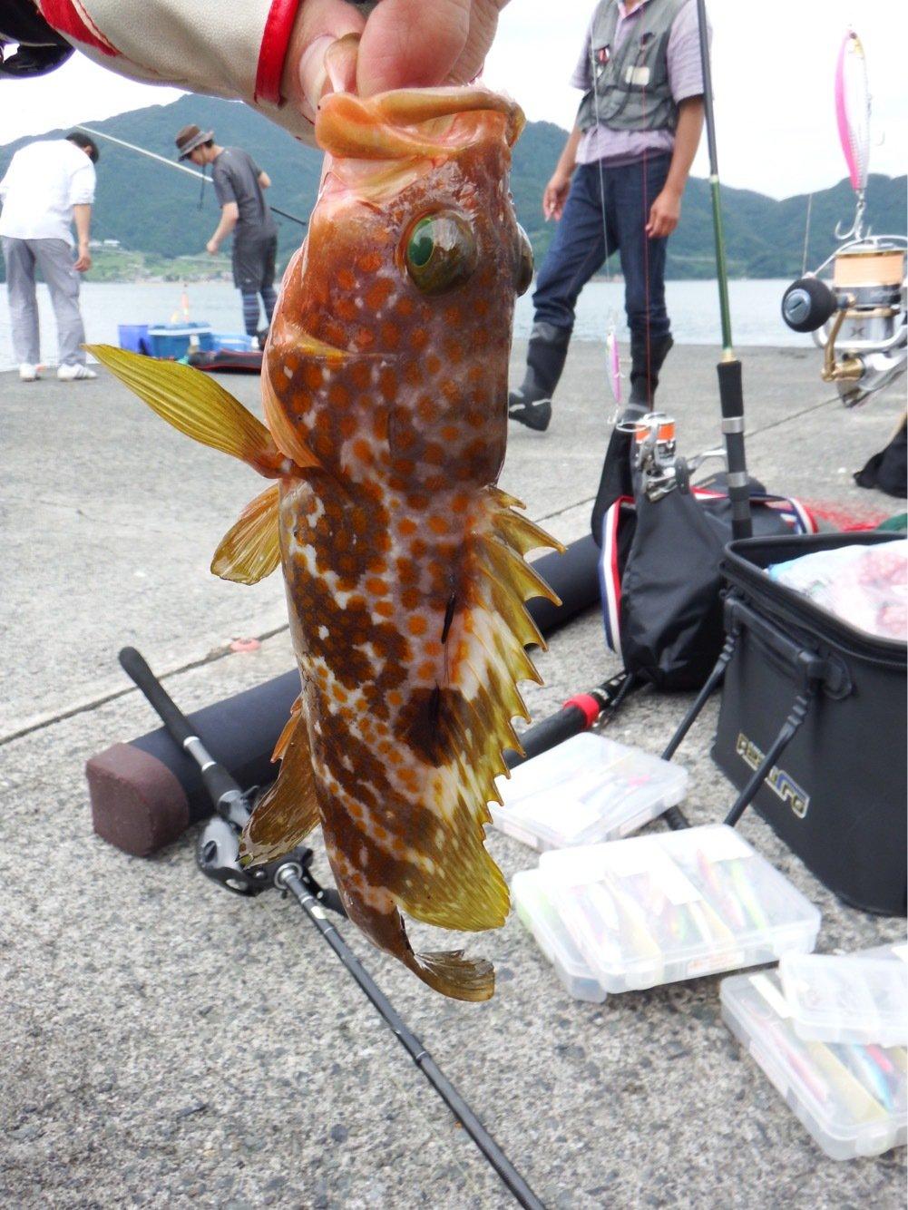 denさんの投稿画像,写っている魚はキジハタ