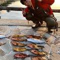 てつさんの佐賀県東松浦郡でのキジハタの釣果写真