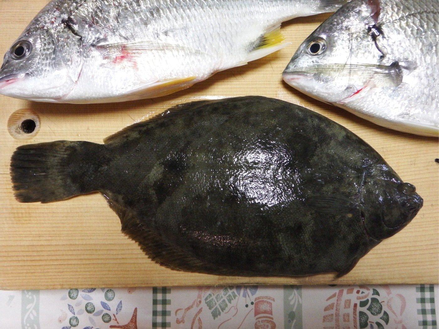 denさんの投稿画像,写っている魚はキチヌ