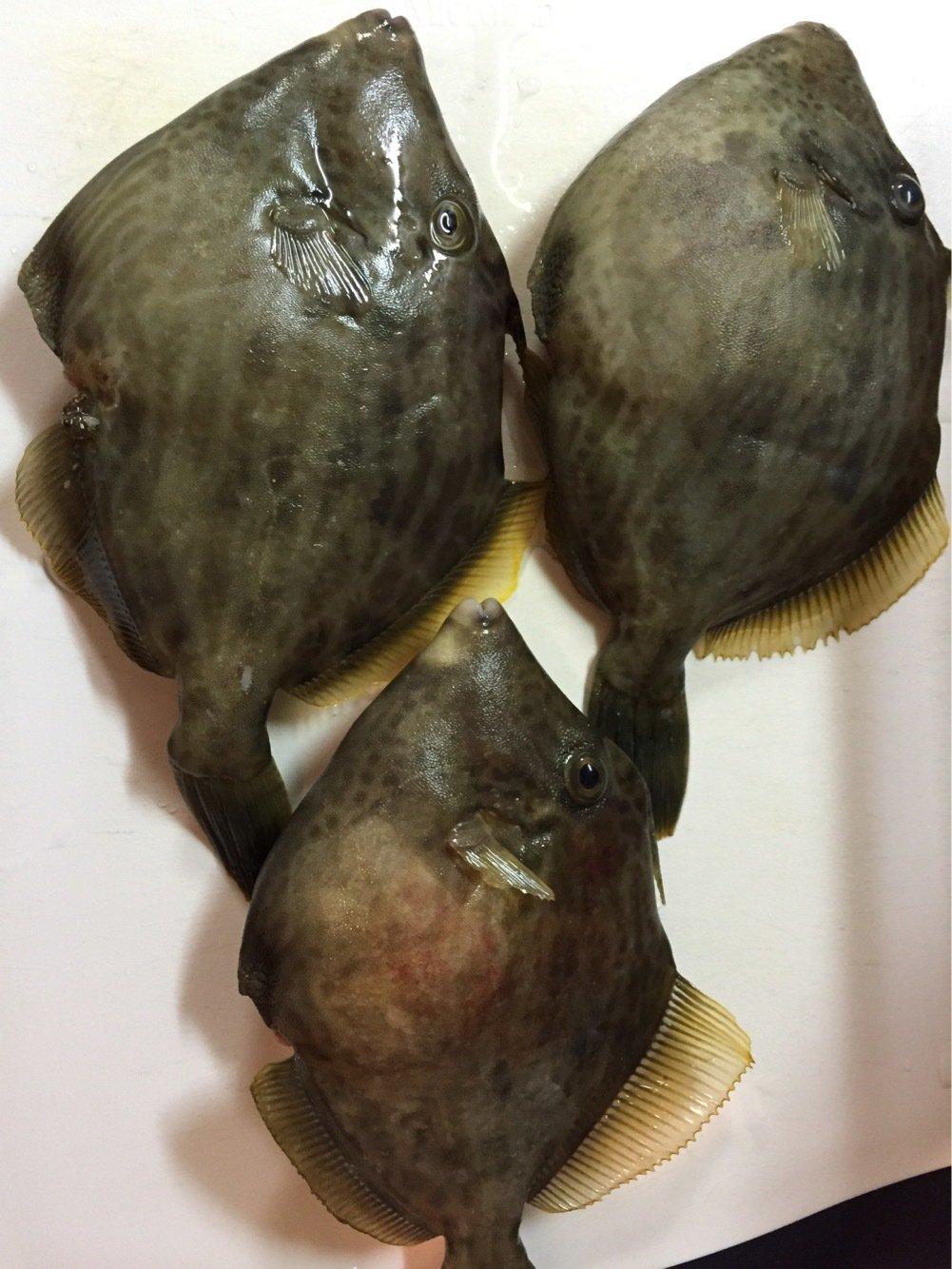 denさんの投稿画像,写っている魚はカワハギ