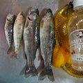 つじさんの北海道北広島市での釣果写真