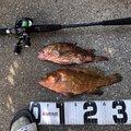 kjTakuさんの佐賀県東松浦郡でのキジハタの釣果写真