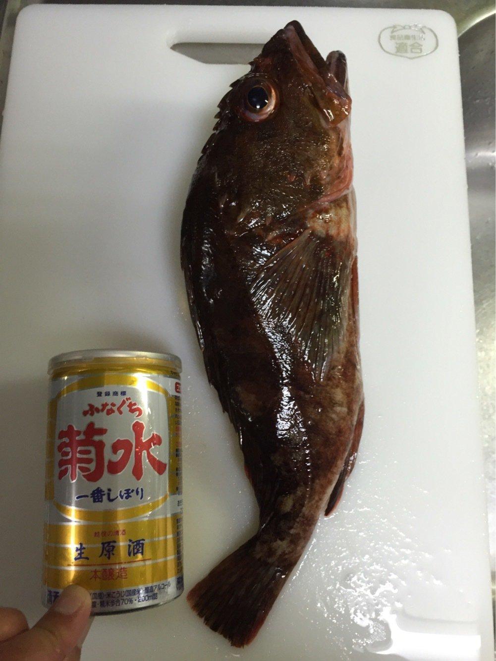 まえださんの投稿画像,写っている魚はカサゴ