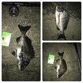 ナオキさんの京都府久世郡での釣果写真