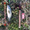 トラさんの宮城県栗原市での釣果写真