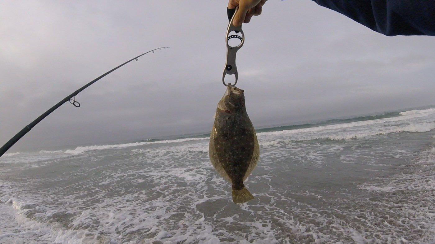 じゅんさんの投稿画像,写っている魚はヒラメ