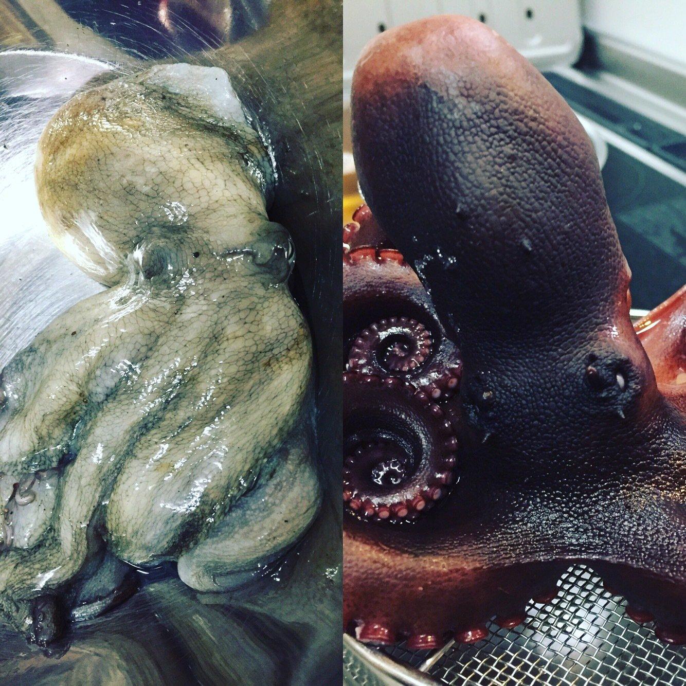 ミヤモトミチヒコさんの投稿画像,写っている魚はマダコ