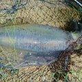 なおさんの長崎県雲仙市でのアオリイカの釣果写真